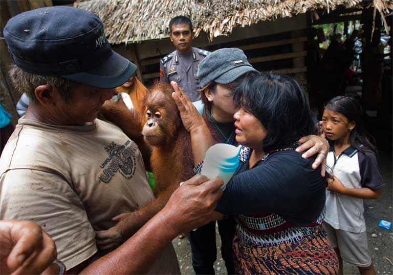 A local family gives up their pet orangutan during a confiscation conducted by local police and SOCO. Photo by Paul Hilton