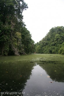 Gabon rainforest. Much of the good habitat for great apes in Africa overlaps with land that would also support large-scale agribusiness. Photo by Rhett A. Butler