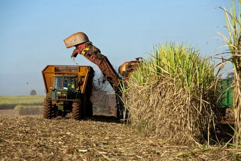 Harvesting sugar cane in Brazil. Agribusiness is another large-scale area of investment for BNDES. Agribusiness has become a powerhouse of the Brazilian economy. Photo by Jonathan Wilkins licensed under the Creative Commons Attribution-Share Alike 3.0 Unported license
