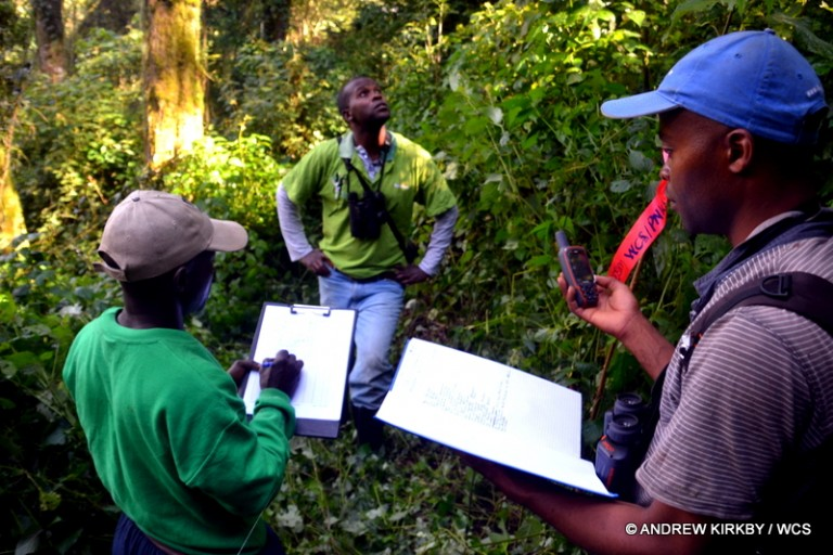 The WCS inventory team in action: Hamlet Mugaba, Celestin Kambale, Albert Masanga. Photo courtesy of Andrew Kirkby / WCS.
