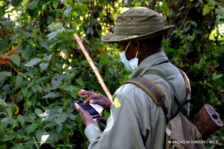 SMART in action in Kahuzi-Biega National Park. Photo courtesy of Andrew Kirkby / WCS.