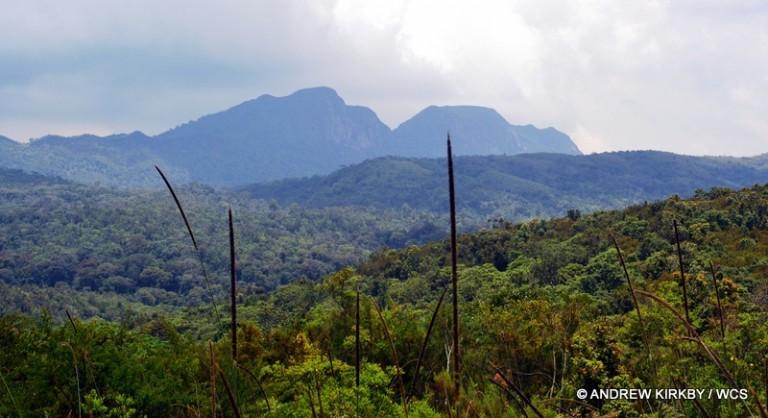 Landscape of Kahuzi-Biega National Park. Photo courtesy of Andrew Kirkby / WCS.