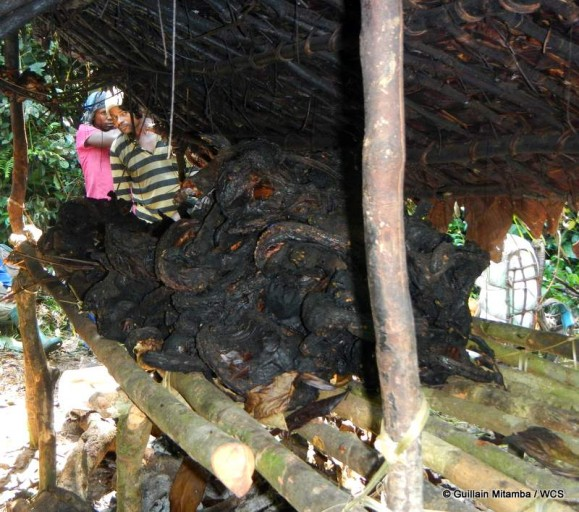 Illegal bushmeat camp found during surveys within Kahuzi-Biega National Park. Photo courtesy of Andrew Kirkby / WCS.