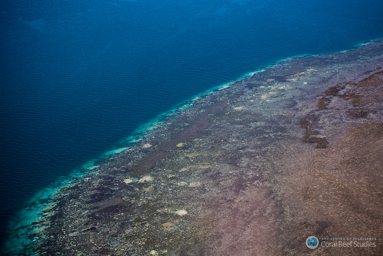 Coral bleaching on Australia's Great Barrier Reef. Photo by ARC Centre of Excellence for Coral Reef Studies / Terry Hughes.