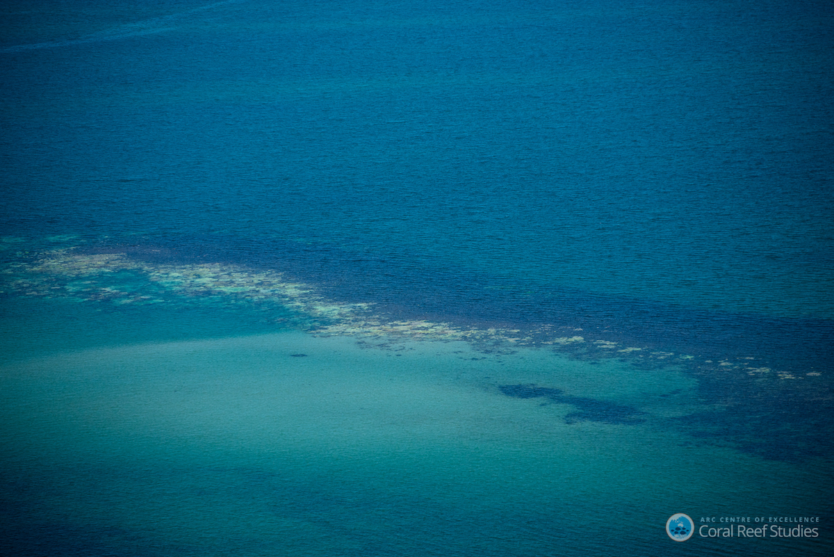 Extensive coral bleaching along a swathe of Australia's Great Barrier Reef. Photo by ARC Centre of Excellence for Coral Reef Studies / Terry Hughes.