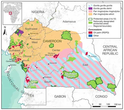Protected areas and great ape habitat in Cameroon. Figure 2.4 on page 53 from the State of the Apes: Industrial Agriculture and Ape Conservation © Cambridge University Press (2015)