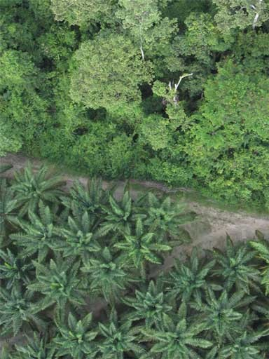 "An oil palm plantation borders rainforest. Conservationists warn that international agribusiness expansion into Africa, palm oil's ""new frontier"", puts numerous protected areas and threatened species at risk. Photo © Serge Wich/conservationdrones.org"