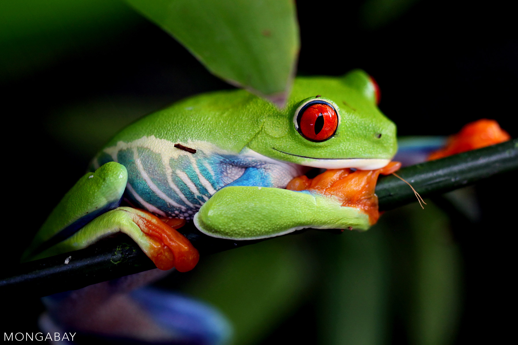 The top 10 most biodiverse countries