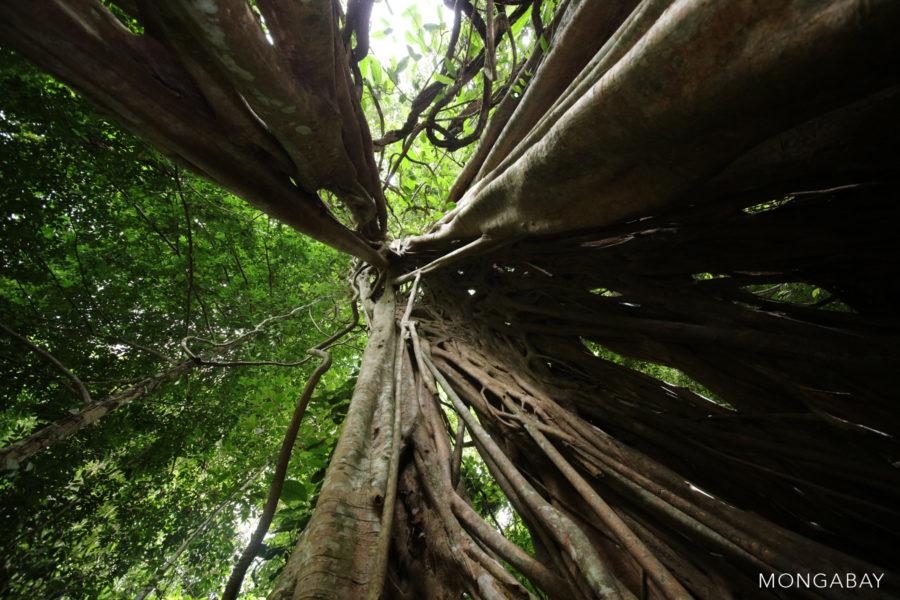 Rainforest in China's Yunnan Province. Photo by Rhett A. Butler
