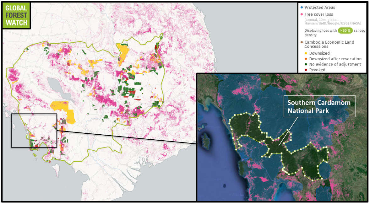 Global Forest Watch shows Cambodia lost nearly 18 percent of its tree cover between 2001 and 2014 – giving it one of the world's highest rates of deforestation. In comparison, the region comprising Southern Cardamom National Park has lost 3 percent of its forests. However, its annual rate of tree cover loss has increased in recent years. Its new status as a national park will afford its forest greater protection from threats like logging.