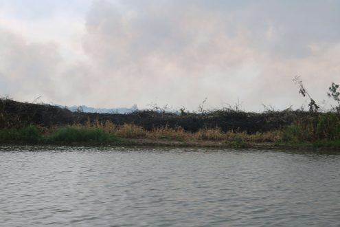 Riparian vegetation burned