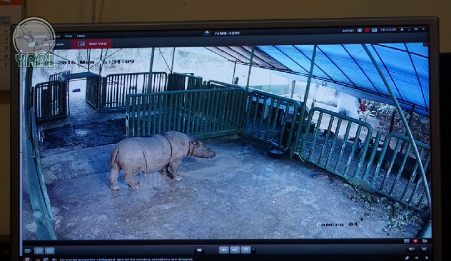 Veterinarians used CCTV cameras to keep an eye on Ratu in the lead-up to her birth. Photo courtesy of YABI