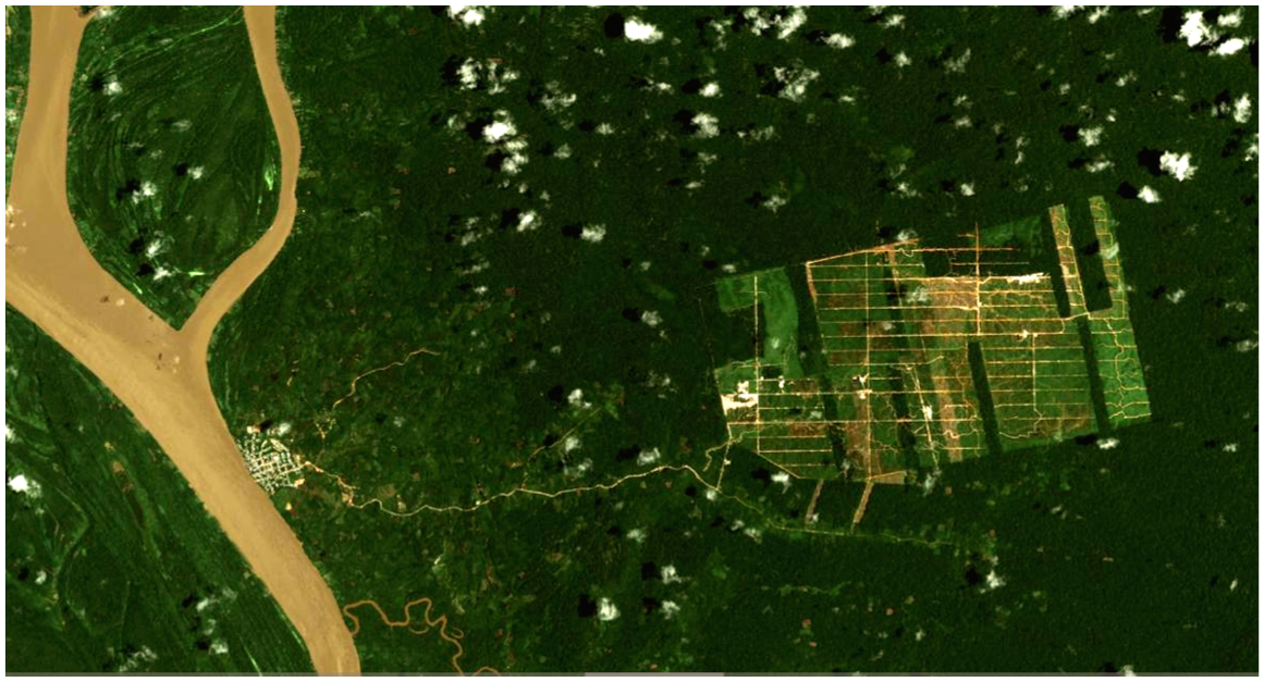 Satellite imagery from Google Earth shows the United Cacao plantation dwarfs the nearby town of Tamshiyacu.