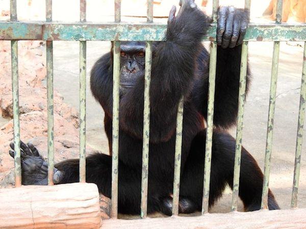 7b. cage