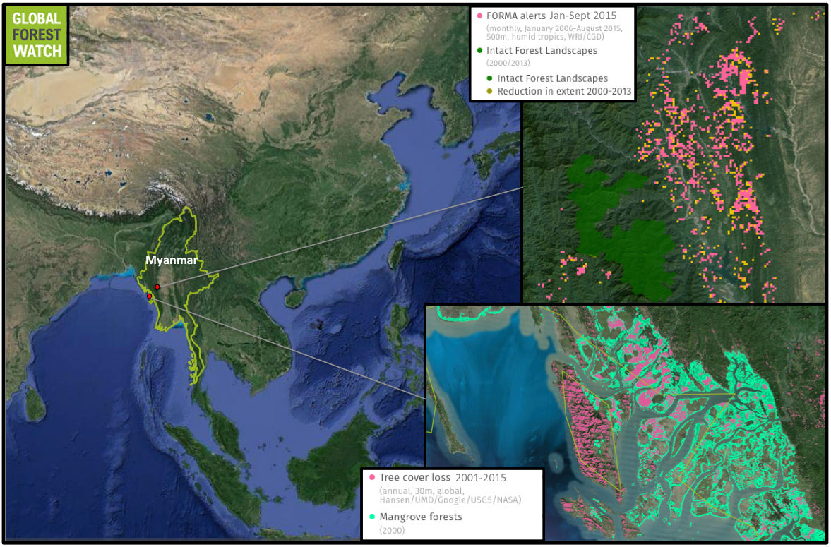 Rice paddies have replaced mangrove forest in southwest part of Myanmar (bottom inset). Above it, tree cover loss alerts cluster near one of the country's last remaining Intact Forest Landscapes, which are particularly large, undisturbed areas of primary forest. This particular are shows a big uptick in recent deforestation, with more than 1,600 FORMA alerts detected from January through September, 2015. Only around 400 alerts were recorded in the region during the same time span in 2014.