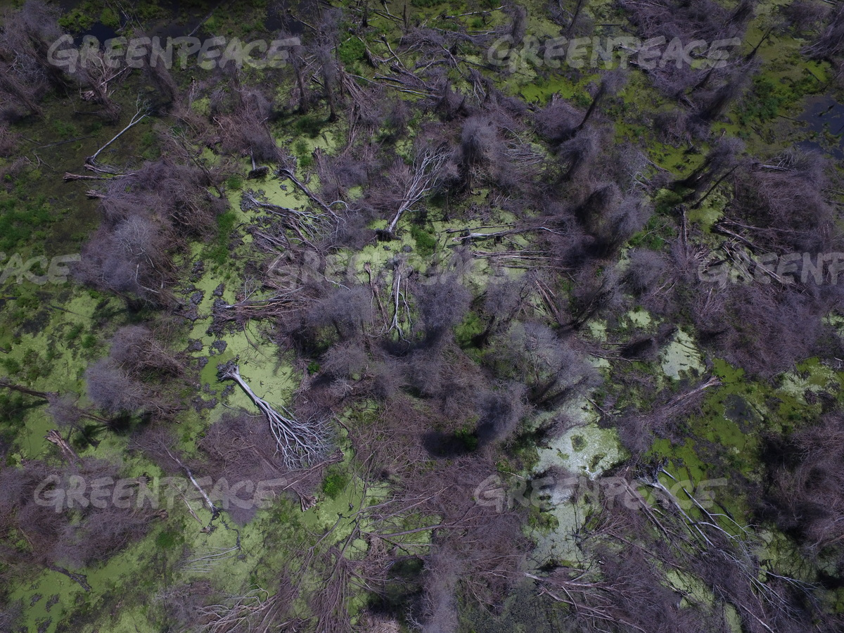 Drone image collected in April by Greenpeace documents extensive forest loss as a result of fires in and around an IOI concession in Ketapang, Indonesia. Image courtesy of Greenpeace