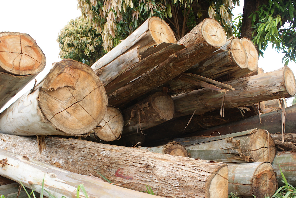 A stack of timber allegedly harvested illegally from Mt. Kenya forest. Photo by David Njagi.