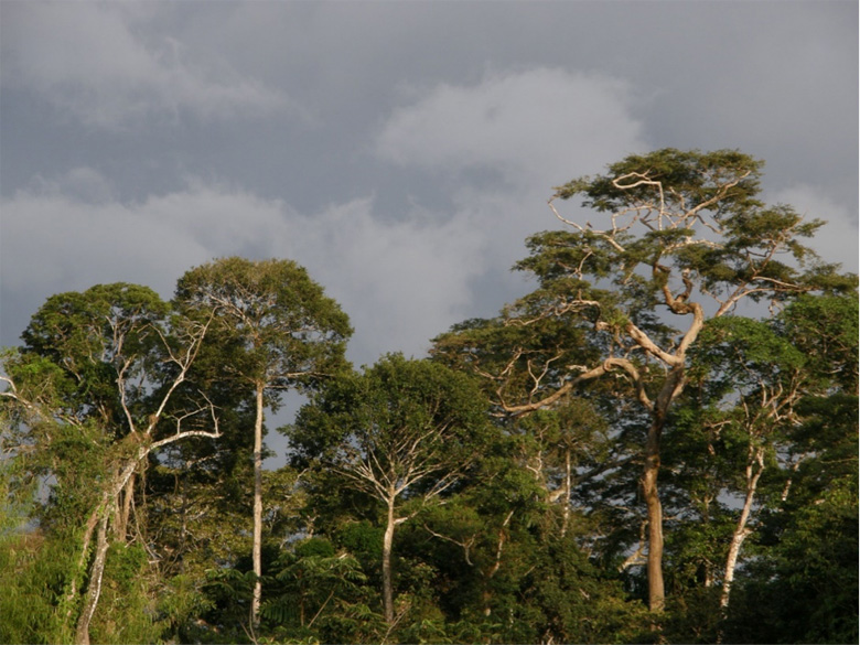 A typical landscape in the tropics hosting a huge biodiversity and offering nesting trees for various parrots and other birds. Photo by George Olah.
