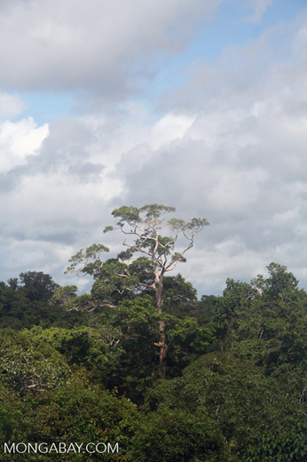 Amazon rainforest canopy. Researchers suggest that an ethical analysis of the Environmental Impact Assessments (EIAs) of major infrastructure projects can help reveal if companies favor financial gain above environmental or social values. Photo by Rhett A. Butler