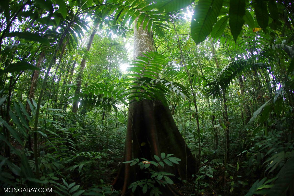 Rainforest in Costa Rica. Photo by Rhett Butler.