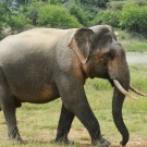 Seven 'most wanted' elephant poachers arrested in Malaysia
