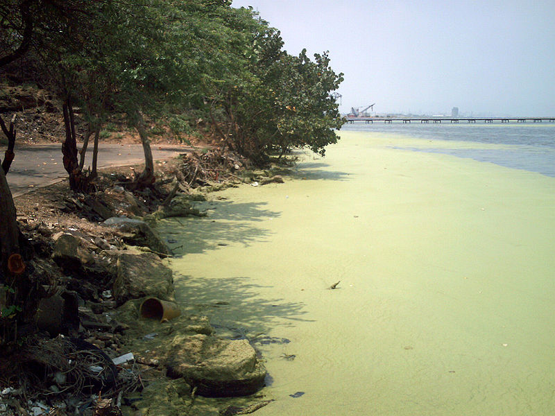 Lake Maracaibo is plagued by duckweed infestations, a problem that arose as the estuary's ecology declined. Photo by The Photographer licensed under the Creative Commons Attribution-Share Alike 3.0 Unported license