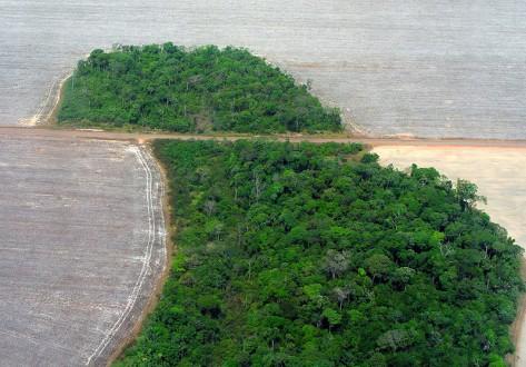 800px-Mato_Grosso_deforestation_(Pedro_Biondi)_12ago2007