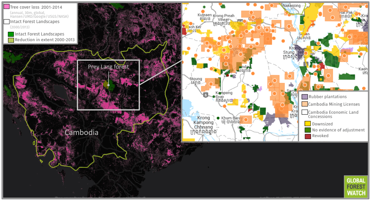 Satellite data from the University of Maryland (UMD) show around 18 percent of Cambodia's forest cover was lost during the 15 years from 2001 through 2014. Of the country's remaining forest, the UN's Food and Agriculture Organization estimates only around 3 percent is primary. Much of this is located in Prey Lang forest, which comprises Cambodia's only Intact Forest Landscape (IFL): a particularly large, undisturbed area of primary forest. Surrounding the Prey Lang IFL are Economic Land Concessions that denote land earmarked for industrial agriculture, as well as established rubber plantations and land licensed to mining companies.