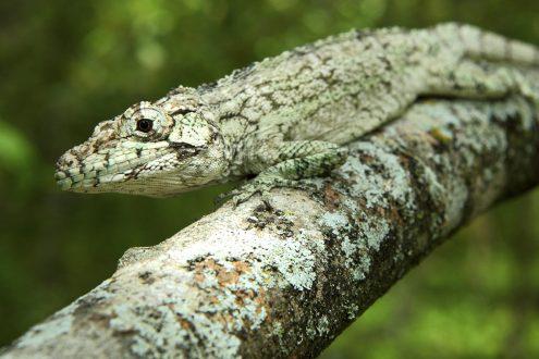 2016-06-17-new-lizard-sized-v2