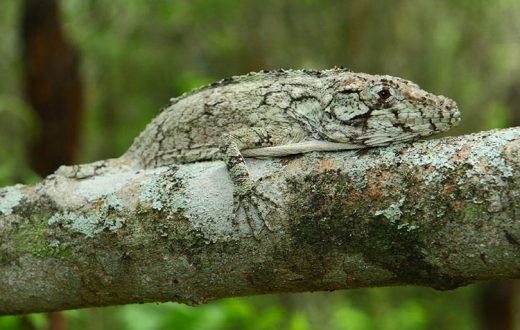 2016-06-17-lizard-embed