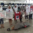 Protesters target Cathay Pacific at Hong Kong International Airport in May. Courtesy of WildAid