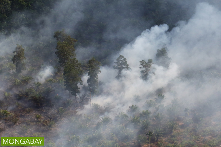 Fire set for peatland clearing in Riau Province, Indonesia in July 2015. Photo by Rhett A. Butler