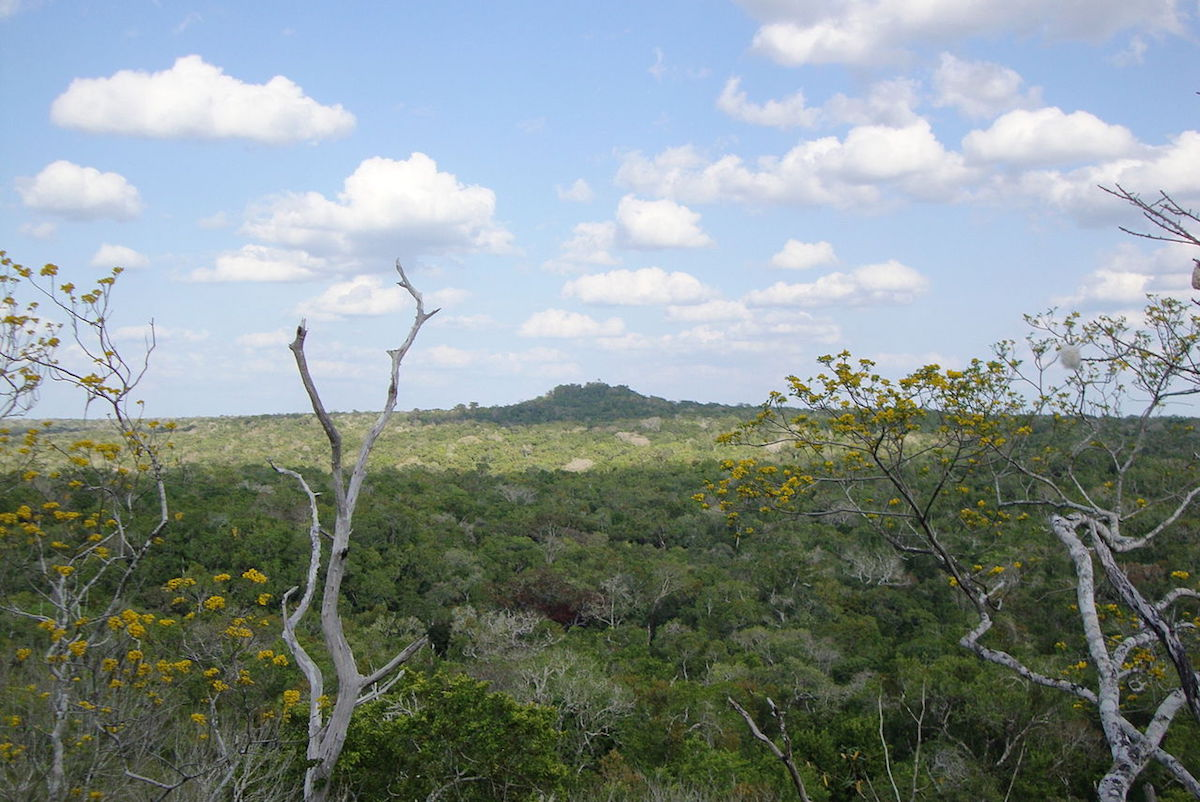 La Danta pyramid in the Mayan city of Mirador, as seen from a distance. Photo by Ronyrocael/Wikimedia Commons.