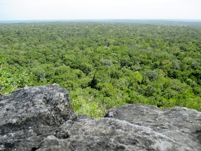 The tropical forest canopy stretches as far as the eye can see from the top of the La Danta pyramid, one of the largest in the world. Photo by Sandra Cuffe.