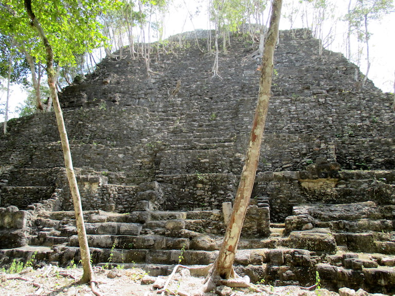 The La Danta pyramid in the ancient Mayan city of Mirador. Its very top rises above the forest canopy in the Mirador-Rio Azul National Park. Photo by Sandra Cuffe.