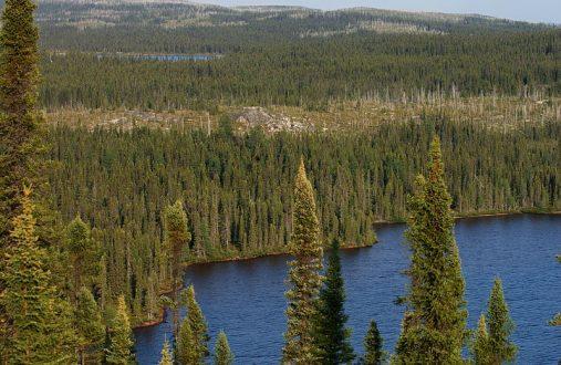 800px-Taiga_Landscape_in_Canada
