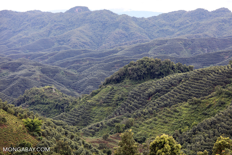 Hill forests cleared and planted with rubber in China's Yunnan province. Photo by Rhett A. Butler.