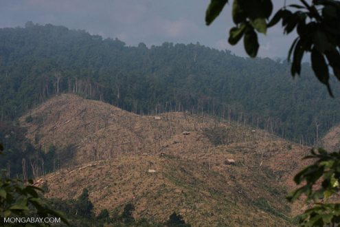 Deforestation for a rubber plantation in Laos. While scientists have been pointing for years to the problems caused by natural forest conversion to rubber plantations, activist groups had been slow to target rubber relative to other commodities like soy, palm oil oil, timber, and wood-fiber.