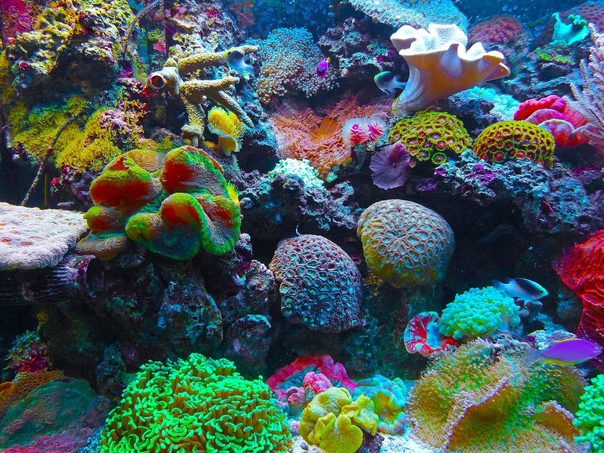 At nearly 1 million hectares, the Tun Mustapha Park includes coral reefs, mangrove, seagrass and productive fishing grounds spread across more than 50 islands and islets. Photo source: Pixabay, public domain.