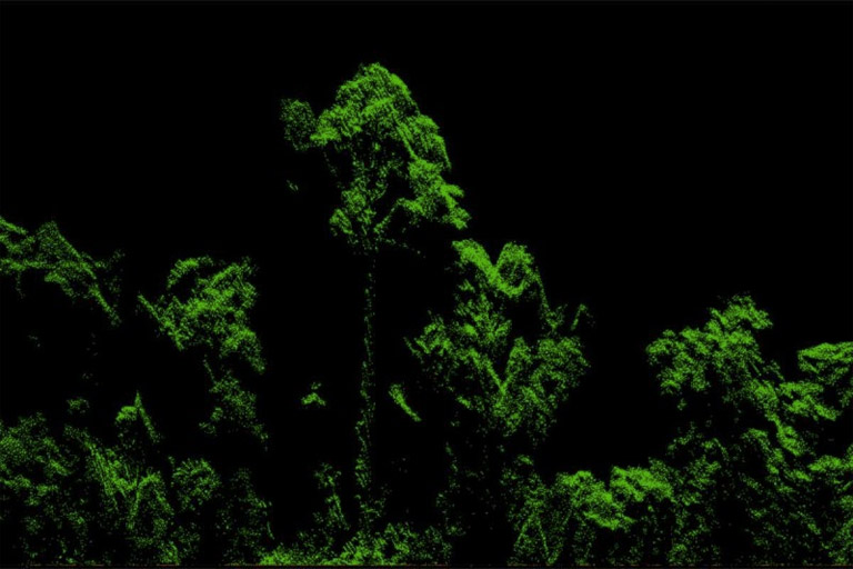 Lidar rendering of the tree by Michele Dalponte