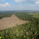 Illegal forest clear for oil palm in Riau Province. Photo by Rhett A Butler