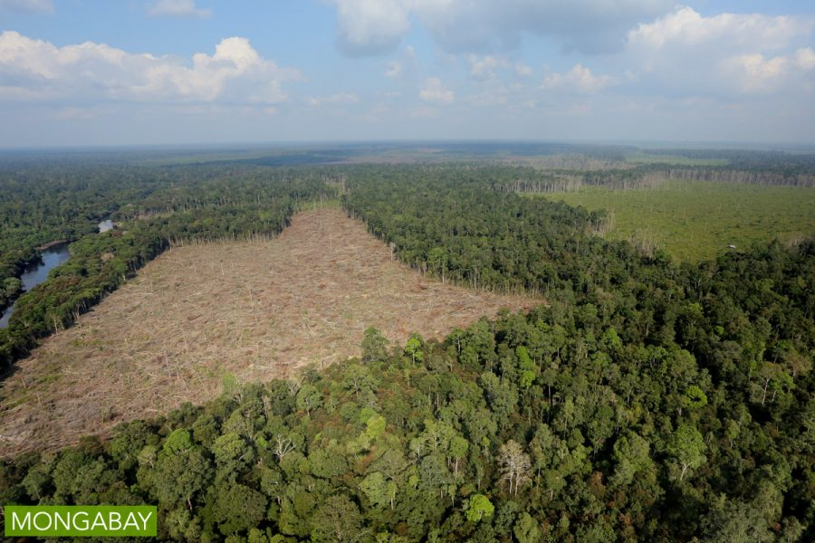 Illegal forest clearing for oil palm in Riau Province. Photo by Rhett A Butler