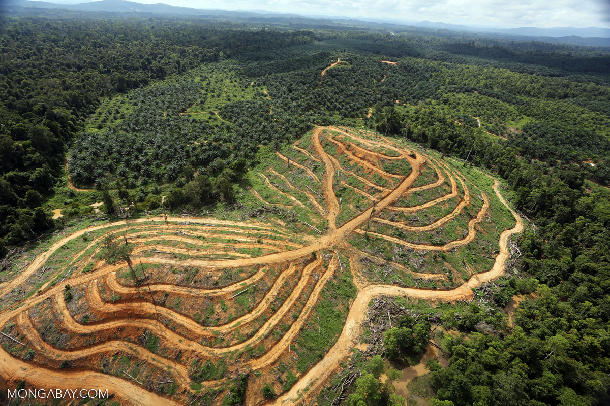deforestation in malaysia Logging clear felling - all trees chopped down in an area selective logging - only fully grown keys are cut down trees that have important ecological value are unharmed.