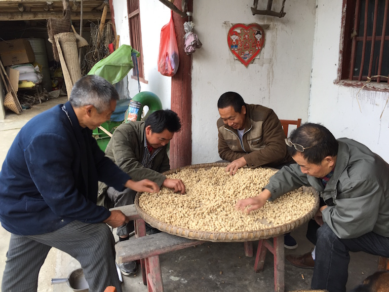 Minzhu villagers sort the peanut harvest. Photo courtesy of Laohegou Nature Reserve Center.