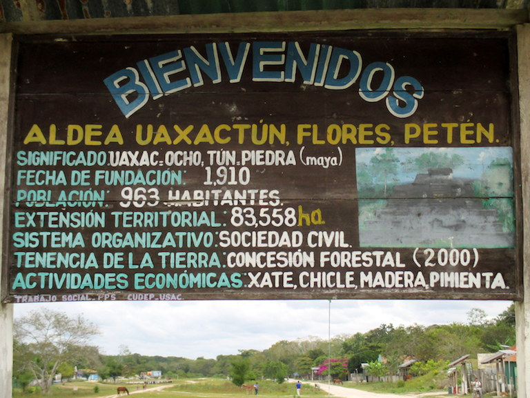 Uaxactún and other community forest concessions face an uncertain future, as their contracts have not yet been extended or renewed. Photo by Sandra Cuffe.