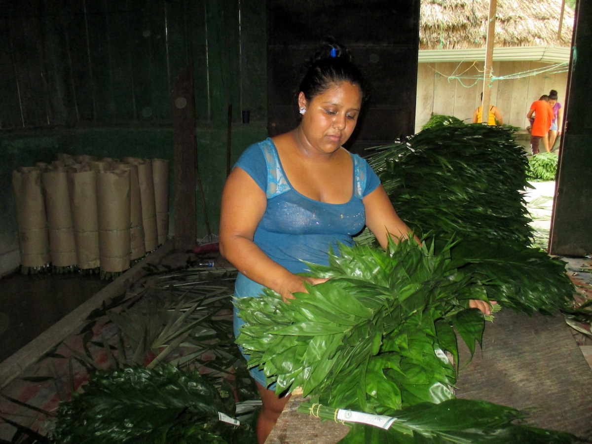 Marta Álvarez inspects xate palm fronds harvested in the Uaxactún community forest concession. Photo by Sandra Cuffe.