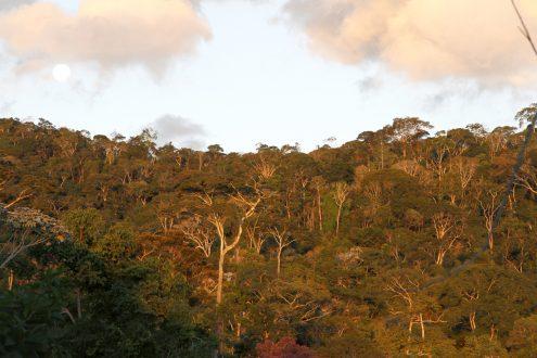 Atlantic Forest Mata do Passarinho Reserve- Bennett Hennessey