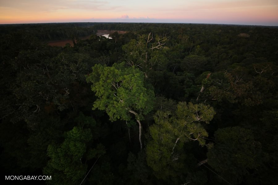 Rainforest in the Peruvian Amazon. Photo by Rhett A. Butler