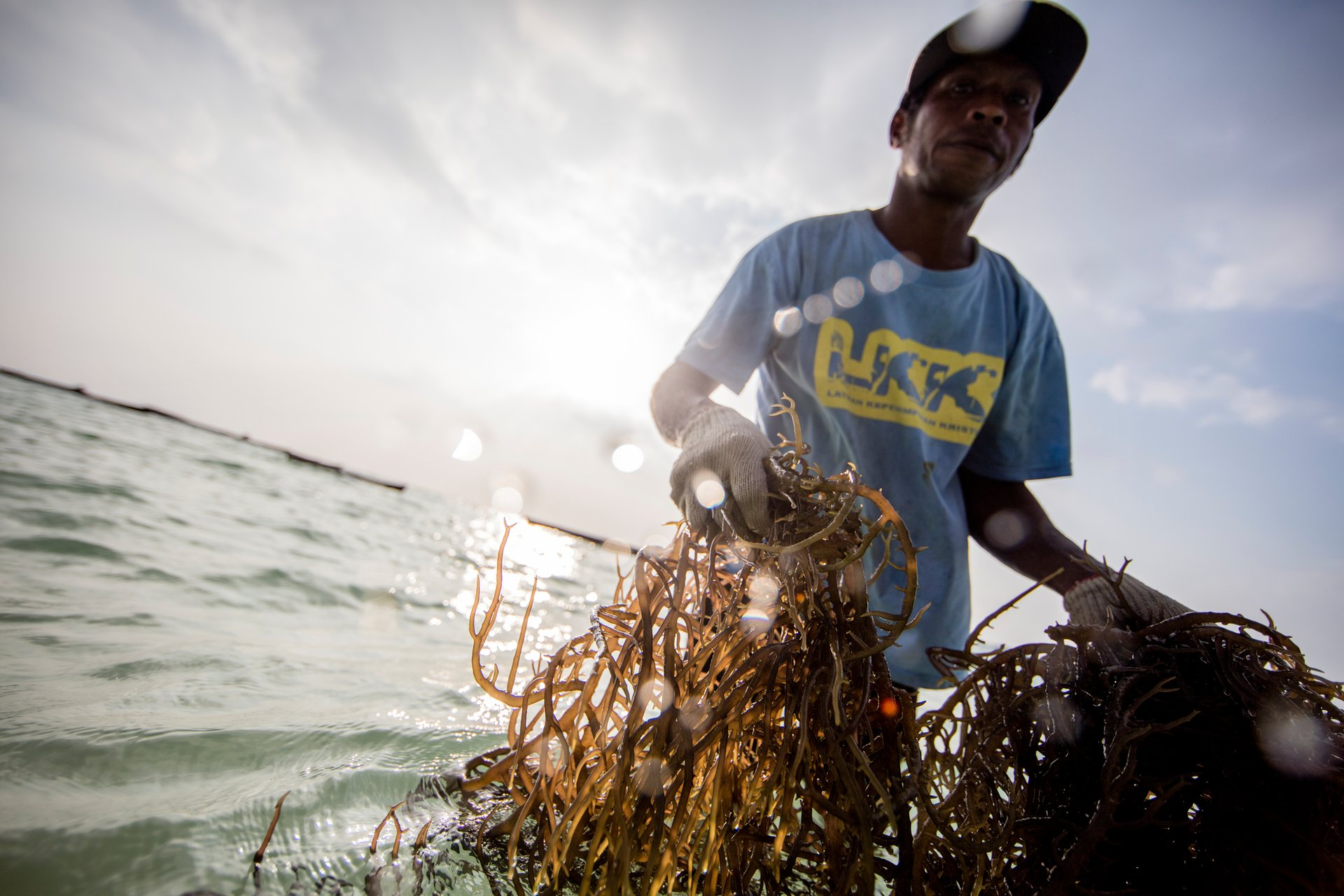 A seaweed farmer on Pasir Panjang beach. His group has agreed to stop harvesting hawksbill turtle eggs and seaweed farming offers a more sustainable alternative.