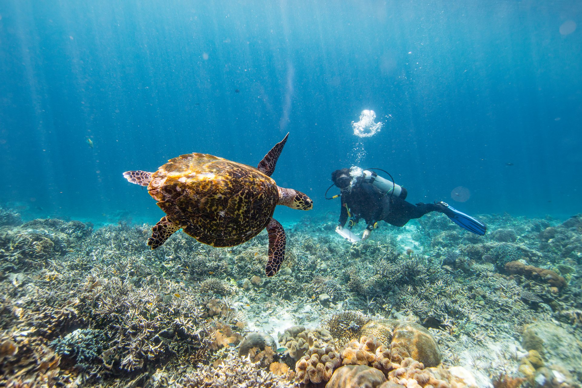Gabby Ahmadia sees a hawksbill turtle. WWF has been working with a seaweed farming community to promote alternative livelihoods to protect endangered turtles.